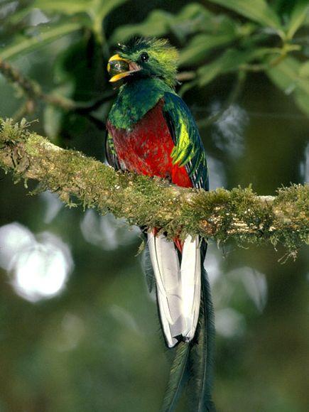 Кетсаль - Священная птица майя